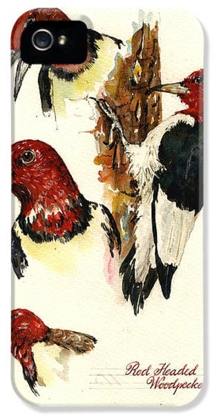 Woodpecker iPhone 5s Case - Red Headed Woodpecker Bird by Juan  Bosco
