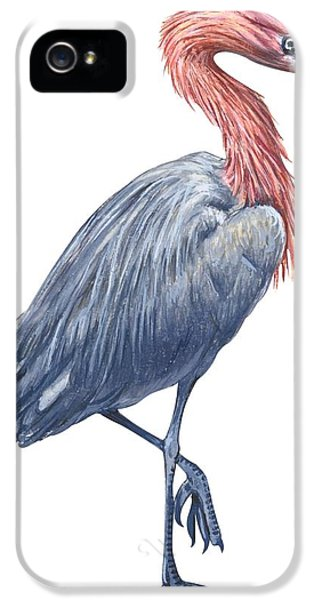 Reddish Egret IPhone 5s Case by Anonymous