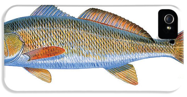 Drum iPhone 5s Case - Redfish by Carey Chen