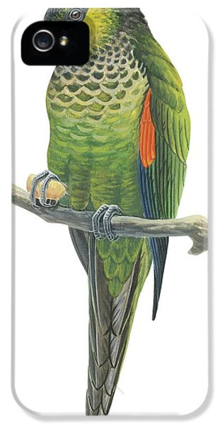 Rock Parakeet IPhone 5s Case