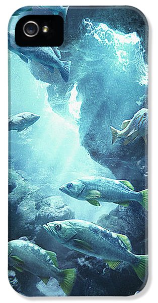 Rockfish Sanctuary IPhone 5s Case by Javier Lazo