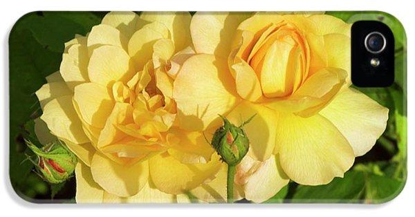 Rosa 'pegasus' IPhone 5s Case by Adrian Thomas