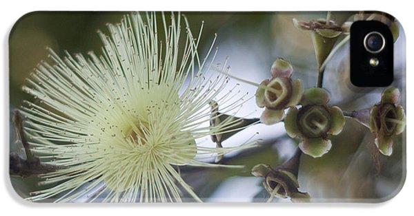 Far North Queensland iPhone 5s Case - Rose Apple Blossom by Kerryn Madsen-Pietsch