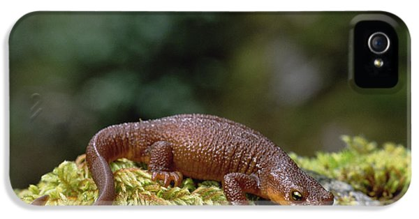 Rough-skinned Newt Oregon IPhone 5s Case by Gerry Ellis