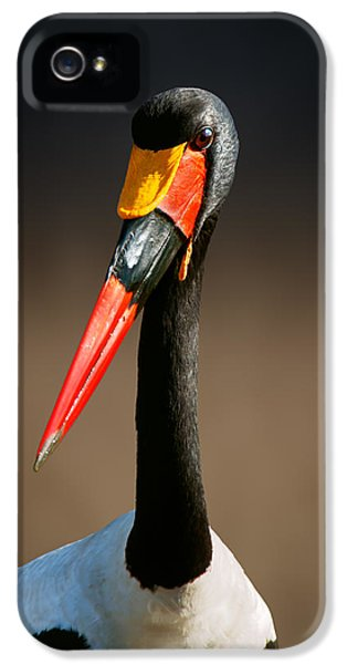 Saddle-billed Stork Portrait IPhone 5s Case