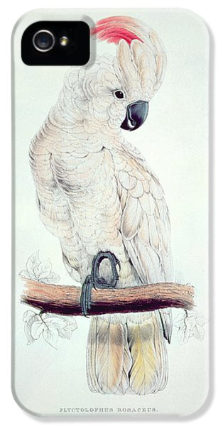 Salmon Crested Cockatoo IPhone 5s Case by Edward Lear