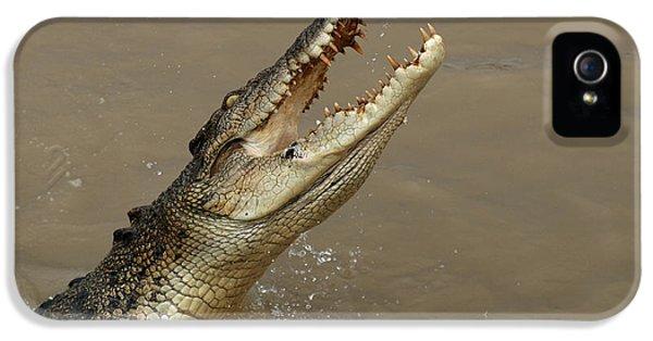 Salt Water Crocodile Australia IPhone 5s Case by Bob Christopher