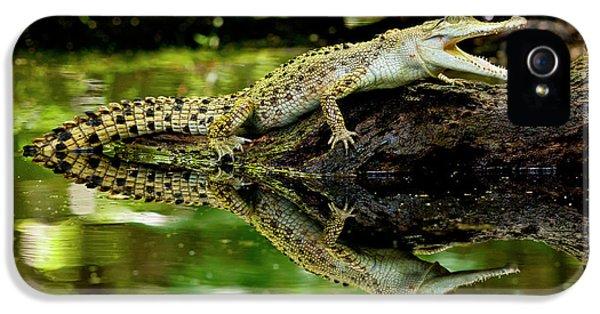 Crocodile iPhone 5s Case - Salt Water Crocodile, Crocodylus by David Northcott