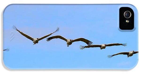 Sandhill Crane Flight Pattern IPhone 5s Case by Mike Dawson