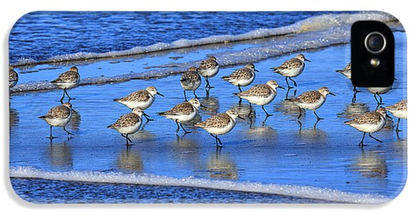 Sandpiper Symmetry IPhone 5s Case by Robert Bynum