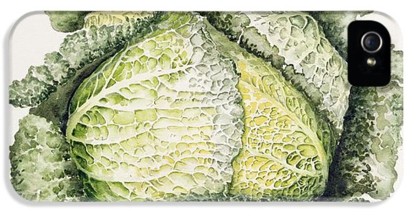 Savoy Cabbage  IPhone 5s Case by Alison Cooper