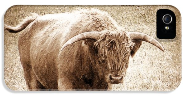 IPhone 5s Case featuring the photograph Scottish Highlander Bull by Karen Shackles