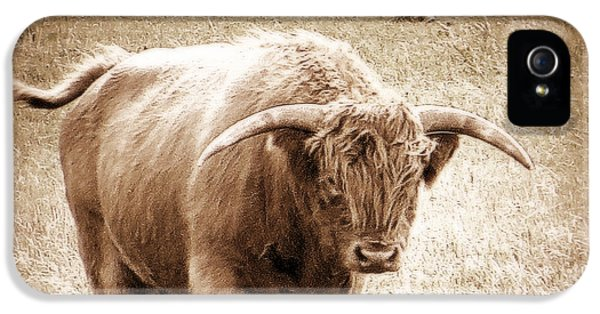 Scottish Highlander Bull IPhone 5s Case by Karen Shackles