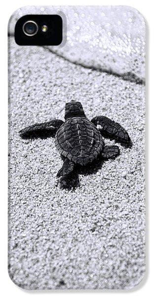 Sea Turtle IPhone 5s Case