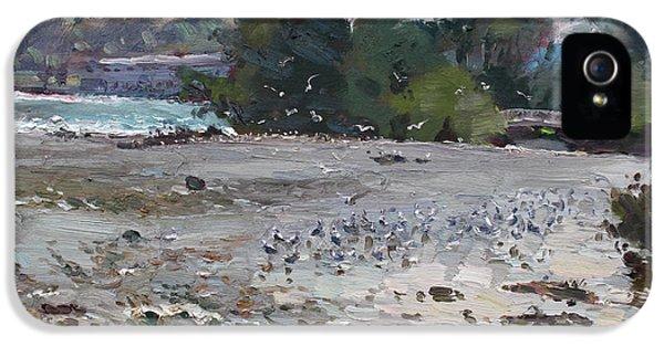 Seagull iPhone 5s Case - Seagulls On Niagara River by Ylli Haruni