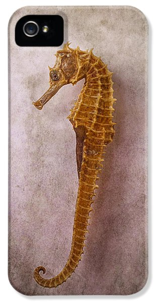 Seahorse Still Life IPhone 5s Case