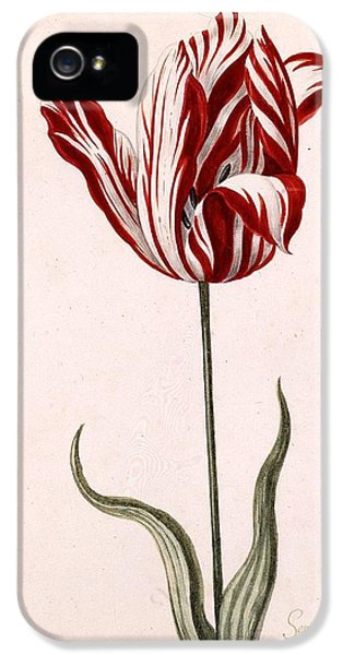 Tulip iPhone 5s Case - Semper Augustus by Celestial Images