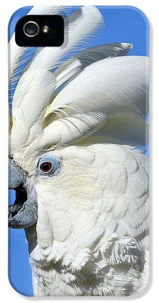 Shady Umbrella IPhone 5s Case by Tony Beck