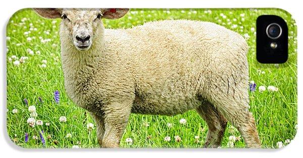 Sheep In Summer Meadow IPhone 5s Case by Elena Elisseeva