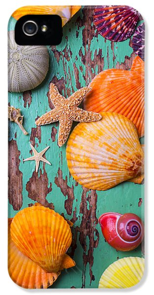 Shells On Old Green Board IPhone 5s Case