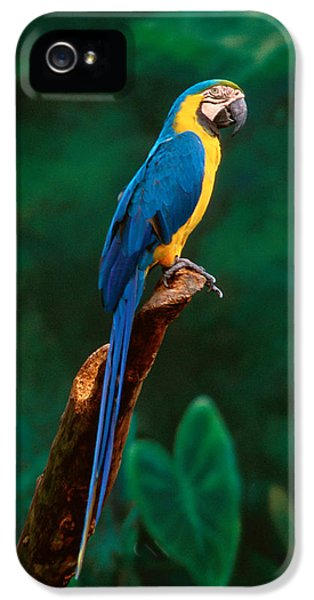 Singapore Macaw At Jurong Bird Park  IPhone 5s Case by Anonymous
