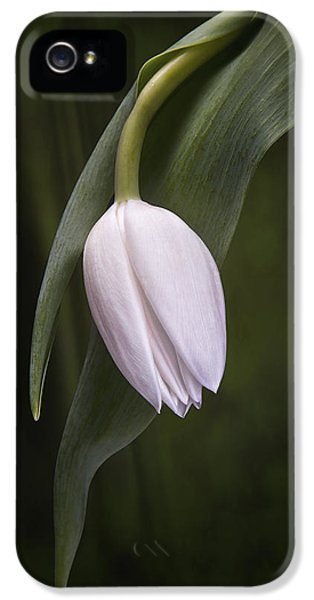 Single Tulip Still Life IPhone 5s Case by Tom Mc Nemar