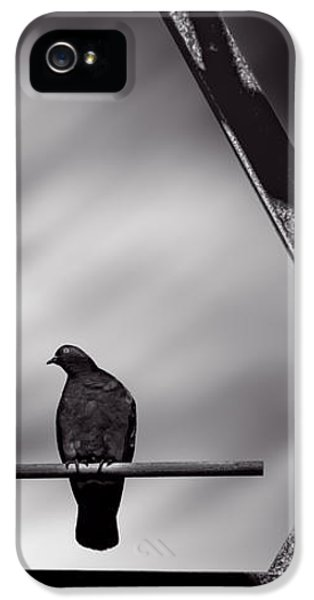 Pigeon iPhone 5s Case - Sitting On A Stick by Bob Orsillo