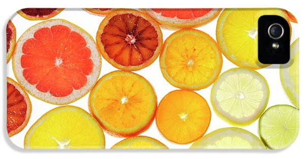 Slices Of Citrus Fruit IPhone 5s Case by Cordelia Molloy