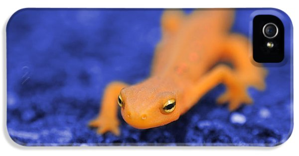 Sly Salamander IPhone 5s Case by Luke Moore