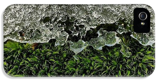 Detail iPhone 5s Case - Snow & Moss, 2015.02.07 #bmr #lehman by Aaron Campbell