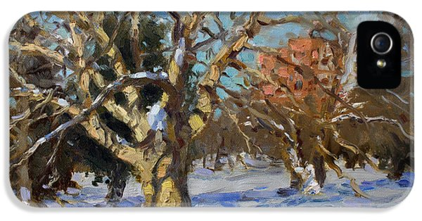 Goat iPhone 5s Case - Snow In Goat Island Park  by Ylli Haruni