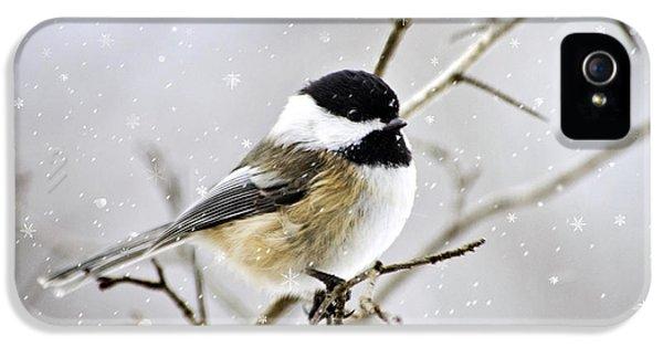 Snowy Chickadee Bird IPhone 5s Case by Christina Rollo