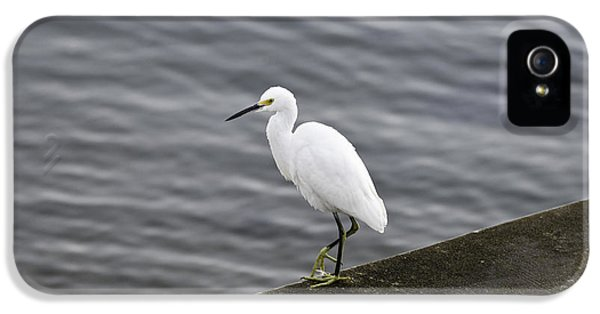 Snowy Egret IPhone 5s Case