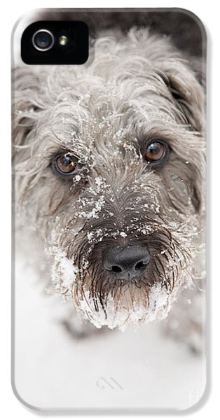 Snowy Faced Pup IPhone 5s Case by Natalie Kinnear
