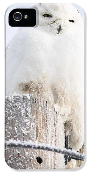 Snowy Owl IPhone 5s Case by Ricky L Jones