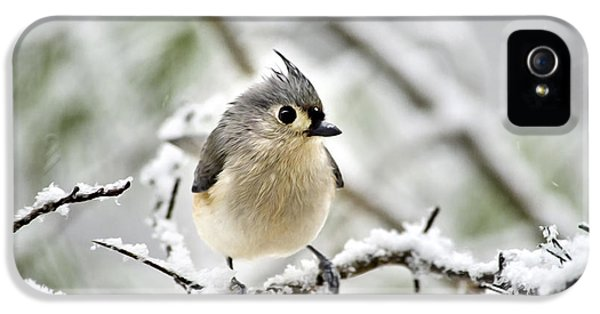 Snowy Tufted Titmouse IPhone 5s Case by Christina Rollo