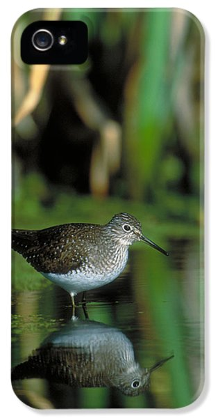 Solitary Sandpiper IPhone 5s Case by Paul J. Fusco