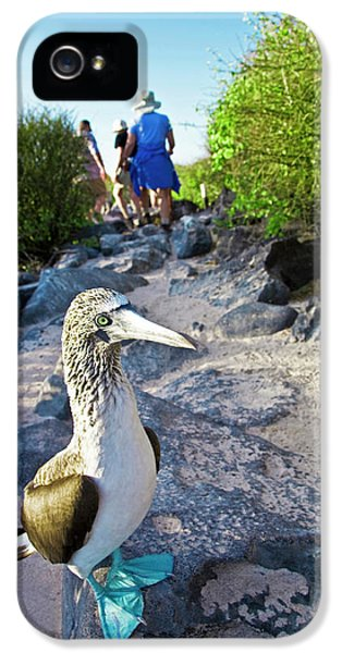 South America, Ecuador, Galapagos IPhone 5s Case