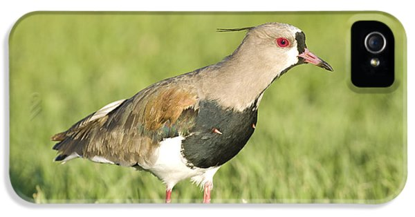 Lapwing iPhone 5s Case - Southern Lapwing by William H. Mullins