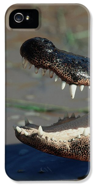 Southwestern United States, American IPhone 5s Case
