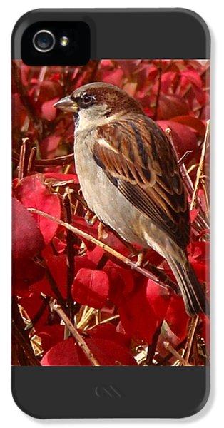 Sparrow IPhone 5s Case