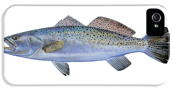 Drum iPhone 5s Case - Speckled Trout by Carey Chen