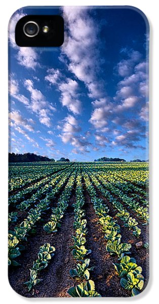 Cabbage iPhone 5s Case - Spring Fresh by Phil Koch