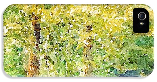 Sunny iPhone 5s Case - Spring Maples by Anna Porter