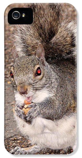 Squirrel Possessed IPhone 5s Case