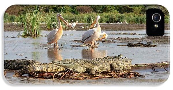 Crocodile iPhone 5s Case - Stalking Crocodile by Tom Norring