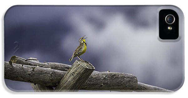 Meadowlark iPhone 5s Case - Stormy Weather And A Sweet Song by Thomas Young
