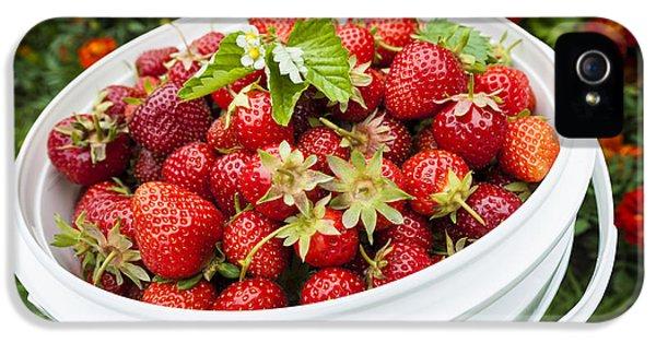 Strawberry Harvest IPhone 5s Case