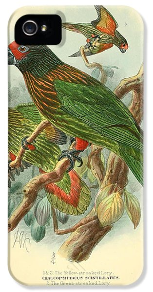 Streaked Lory IPhone 5s Case