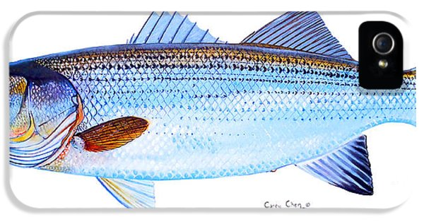 Striped Bass IPhone 5s Case by Carey Chen